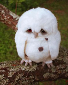 Well now this is just adorable. #owl #omgitssofluffy #animals