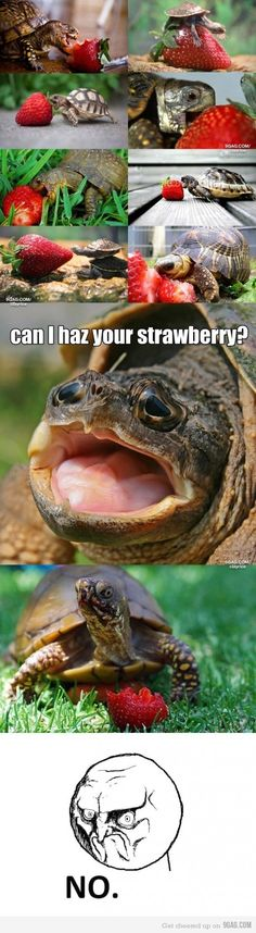 Is it strange that I find it ridiculously adorable when tortoises and turtles eat?