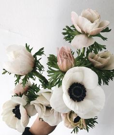 Stunning anemone florals by make for the perfect winter bouquet! My Flower, Fresh Flowers, Beautiful Flowers, Cactus Flower, Exotic Flowers, Purple Flowers, Gift Flowers, Anemone Flower, Bouquet Champetre