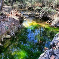 Wild Basin Wilderness Preserve Hiking Trail in Austin, TX, US. This place is popular with Outdoorsmen, Locals