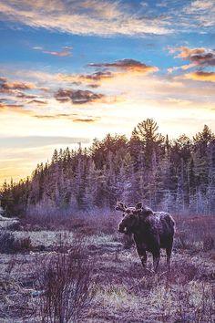Sunset MoosebyWesley Liikane