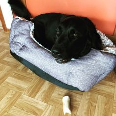 This new bed is too small methinks #blackdog #dogsofinstagram