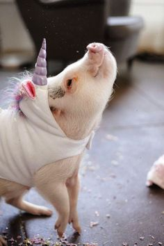 Meet Hamlet the piglet. Hamlet (aka Hammy) is also a unicorn. See below. | This Piglet Dressed As A Unicorn Is Making Everyone Cry Rainbows