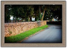 Stone fences of Kentucky.