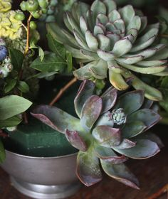 how-to on making succulent arrangements. you know, just in case i'm going to take up flower arranging.