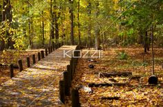 walkway and autumn leaves. - Image of walkway and autumn leaves.