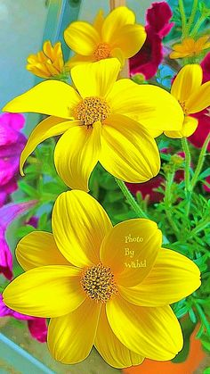 Blossom Garden - Paradise of Flowers! Beautiful Flowers Wallpapers, Wonderful Flowers, Beautiful Flowers Garden, All Flowers, Exotic Flowers, Beautiful Roses, Pretty Flowers, Yellow Flowers, Colorful Flowers