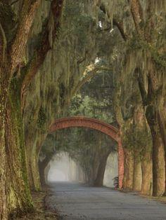 Entrance To Bethesda in Early Morning Light, Savannah, Georgia, USA Photographic Print