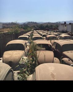 girls and cars - vw junkyard with no girls Volkswagen Bus, Vw T1 Camper, Abandoned Cars, Abandoned Places, Kdf Wagen, Vw Vintage, Mini Bus, Rusty Cars, Vw Beetles