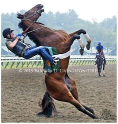 Ooops...don't you hate when that happens? This morning at Saratoga (and, yes, horse and rider were OK).  #whatgoesup
