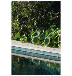 Ligularia reniformis taking front stage 📷 Tractor Seats, Planting Plan, St Albans, Balcony Garden, Spas, Pools, Garden Design, Plant Leaves, Reflection