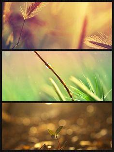 Life, raindrops & sunset...