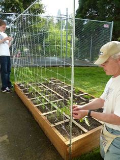 How to build a Tomato or Vegetable Trellis