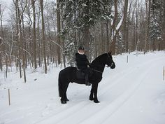 It's always so magical to go horseback riding in pristine snow. Here I am astride Rinze, who seems to really enjoy the snow.
