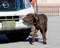 Check out the photos from K9 Nose Work NW1 Trial and EST Level 1 Containers.