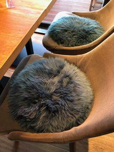 Passend zu jeder trendigen Einrichtung: echte Lamm-Sitzfelle in vielen modischen Farben. Bean Bag Chair, Furniture, Home Decor, Fine Dining, Terrace, Home, Colors, Decoration Home, Room Decor