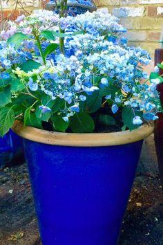 The best plants for amazingly low maintenance garden pots - The Middle-Sized Garden Hydrangea Quercifolia, Hydrangea Arborescens Annabelle, Hydrangea Potted, Hydrangea Varieties, Smooth Hydrangea, Hydrangea Garden, Water Plants, Cool Plants, Planter Hortensia
