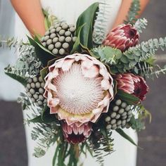 AF amb Protea King protea bouquet love the colors, clear, simple, green, straight Bouquet De Protea, Protea Flower, Protea Wedding, Floral Wedding, Bouquet Wedding, Bridesmaid Bouquet, Fleur Protea, Wedding Flowers, Unique Weddings