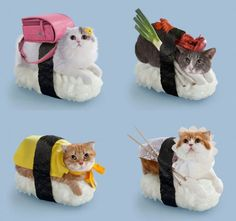 Sushi cats! What's next Japan? What's next!? - Funny Stuff