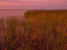 Grass on Lake Shore at Sunrise 1