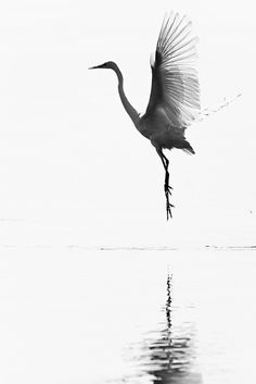 Uccelli allo stato libero black and white animal photography Japanese Painting, Chinese Painting, Chinese Art, Japanese Art, Ink Painting, Watercolor Paintings, Painting Abstract, Crane Tattoo, Bird Art