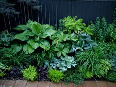 Various foliage. Light and dark.  Hostas.  Lime, purple, green.