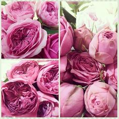 great vancouver florist All these beautiful garden roses are ready for a project tomorrow. #gardenroses #pretty #beautiful#love weddibginspiration #dushanflowers by @dushanflowers  #vancouverflorist #vancouverflorist #vancouverwedding #vancouverweddingdosanddonts