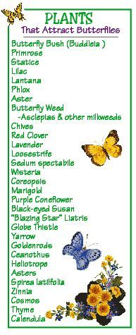 Bring in the Butterflies • Tips, Ideas and Tutorials! Including, from 'kids growing strong', this great list on plants that attract butterflies..
