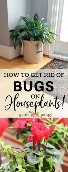 Indoor Gardening How to get rid of bugs on houseplants! - Expert David Squire is here with some tips to help prevent, identify, and get rid of houseplant pests before they do too much damage. Plant Bugs, Plant Pests, Garden Pests, Garden Tools, Garden Ideas, Potager Garden, Garden Bed, Organic Vegetables, Growing Vegetables