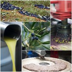 Extraction of olive oil is usually carried out in large units. However, this can also be done in a small setup. Here are a few simple methods to make olive oil at home. Greenhouse Cover, Large Greenhouse, Home Greenhouse, Makeup Storage, Food Storage, Grand Popo, Marinated Olives, Olive Press, Pantry Essentials