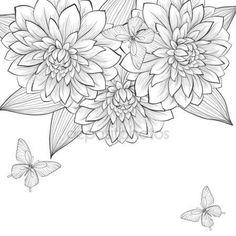 Bellissimo sfondo bianco e nero monocromo con telaio di dahlia fiori e farfalle — Vettoriali Stock © Jane_Hulinska #41425241