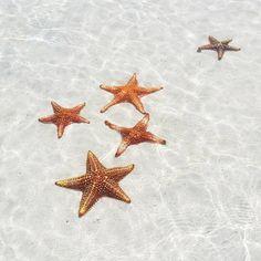 Starfish Point, Gran