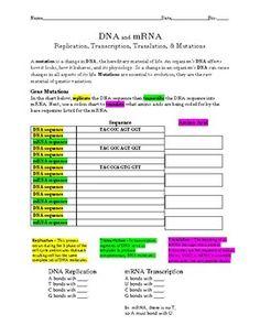 Transcription and translation practice worksheet1