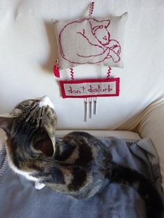 un cuscinetto e due gatti