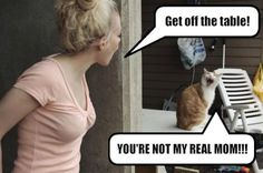 funny cats, humor, You're not my real mom Haha Funny, Funny Cats, Funny Jokes, Funny Animals, Funny Stuff, Silly Cats, Stupid Cat, That's Hilarious, Mom Funny