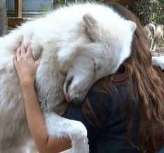 "This Artic Wolf ""Kyra"" lives at the Big Oak Wolf Sanctuary and he loves Kristin one of their amazing volunteers. This Artic Wolf ""Kyra"" lives at the Big Oak Wolf Sanctuary and he loves Kristin one of their amazing volunteers. Animals And Pets, Baby Animals, Funny Animals, Cute Animals, Wild Animals, Wolf Spirit, Spirit Animal, Animal Hugs, Beautiful Creatures"