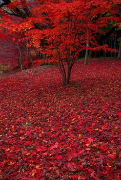 Red carpet treatment
