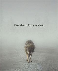Quotes 'nd Notes - Im alone for a reason. The reason… - Im Alone Quotes, Loner Quotes, Reality Quotes, Mood Quotes, Forever Alone Quotes, Better Alone Quotes, Love Nature Quotes, Wolf Pack Quotes, Lone Wolf Quotes