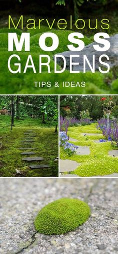 Moss Gardens : How to Grow Moss Outdoors Marvelous Moss Gardens. This would be great in pathways of a vegetable garden! This would be great in pathways of a vegetable garden! Gardening For Beginners, Gardening Tips, Gardening Courses, Gardening Supplies, Growing Moss, Gardening Gloves, Organic Vegetables, Growing Vegetables, Shade Garden