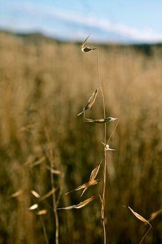 http://www.idunminerals.com  #oats
