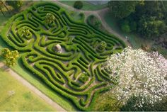 The wavy hedges of Glendurgan maze in Cornwall seen from above Into The Wild, Landscaping Software, Garden Landscaping, Days Out In Cornwall, Rope Swing, Magnolia Trees, Garden Park, Love Garden, Cornwall England