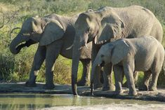 Namibie: Itinéraire de notre Road Trip en famille • POESY by Sophie African Elephant, African Safari, Travel With Kids, Family Travel, Road Trip, Camping, World, Animals, Hotels