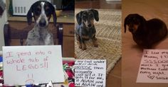 10 Reasons Why Dachshunds Are THE MASTERS Of Getting Into Trouble!