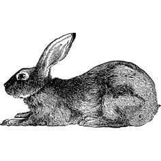 Rabbit at Rest Wall Decal by WilsonGraphics on Etsy, $12.00