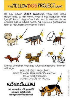 Mit jelent a sárga szalag a kutya pórázán?