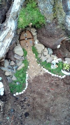 Fairy garden in a tree stump.