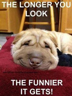 Funny Animal Pictures Of The Day Lustige Tierbilder des Tages – 32 Bilder – Schöne Tierwelt Dog Memes Funny Animal Memes, Dog Memes, Funny Animal Pictures, Funny Dogs, Funny Memes, Animal Pics, Funny Photos, Funniest Pictures, Hilarious Pictures