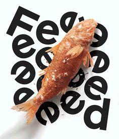 Feed Magazine identity