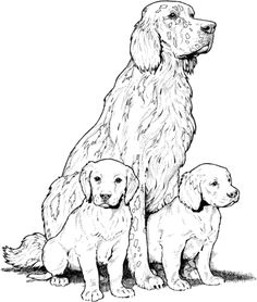 Labrador with Puppies coloring page from Dogs category. Select from 24104 printable crafts of cartoons, nature, animals, Bible and many more.