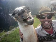 Funny Animal Selfie